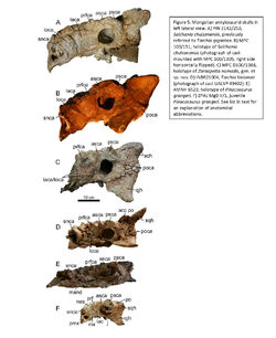 Arbour etal 2014 Mongolian ankylosaurs