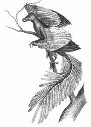 1886-Archeopteryx by Robert W. Shufelt