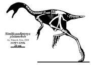 Skeletal reconstruction of Similicaudipteryx