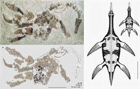 Polycotylus latippinus