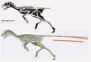 Epidexipteryx skeleton