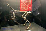 Avimimus fossil