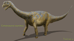 292 camarasaurus frank lode
