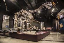 Camarasaurus Lyon-musee-des-confluences-lyon-france