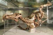 Edmontosaurus Senckenberg 02