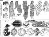 Хайнаньская биота
