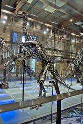 Dollodon skeleton