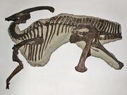 Parasaurolophus fossil
