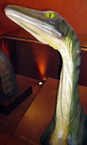 800px-Troodon head neck NHM