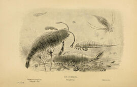 Extinct monsters (Plate I) (5977251311)