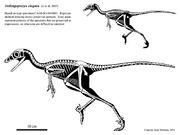 Jinfengopteryx hartman 2005