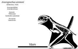 0anurognathus skeletal by sassypaleonerd dday7oc-pre