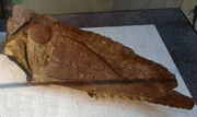 DsungaripterusWeii-PaleozoologicalMuseumOfChina-May23-08