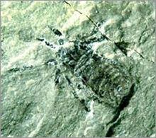 Гигантокаринус 2