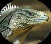 Рептилии лого