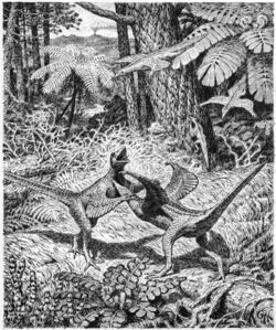 Heilmann's hypothetical illustration of a pair of fighting 'Proaves' (1916).