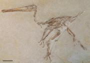 0Aerodactylus main slab