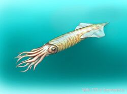 Pachyteuthis
