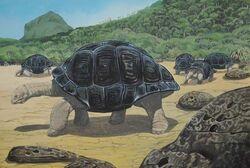 Родригесская гигантская черепаха