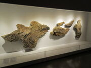 Triceratops skin impressive 02