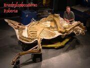 Brachylophosaurus Roberta