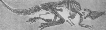 Saurolophus AMNH5220