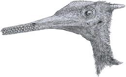 0Aerodactylus portrait