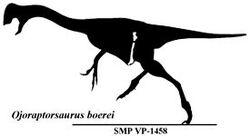 Ojoraptorsaurus boerei