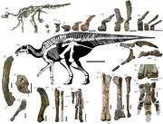 Holotype skeleton of Kamuysaurus