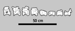 Phu Wiang Spinosaurid Skeletal by PaleoGeek