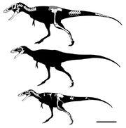 Alioramus vs Qianzhousaurus