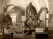 Diplodocus Paleontological Museum, Moscow