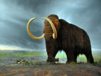 Last-woolly-mammoths