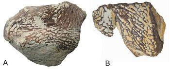 Кости черепа платиопозавра
