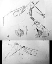 488px-Ardeadactylus longicollum holotype