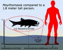 Moythomasia
