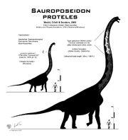 Sauroposeidon proteles