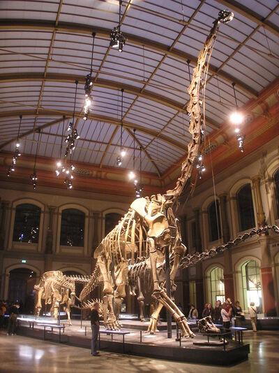 Скелет жираффатитана