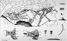 Compsognathus Nopsca 1903