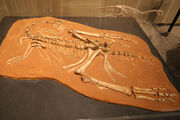 Ingenia fossil