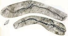 Адриозавр 4