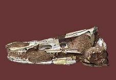 Olc 046 byronosaurus jaffei front