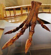 Spinosaurus foot restoration