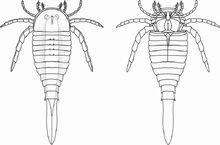 800px-Drepanopterus abonensis by ansuz urisyr