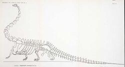 Diplodocus carnegii (Tornier Gustav, 1909)
