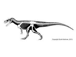Megalosaurus skeletal