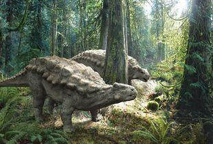 Картинки по запросу Пинакозавр