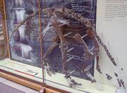 Camptosaurus fssil