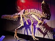 Sinraptor Tyrrell