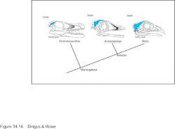 Archaeopteryx4